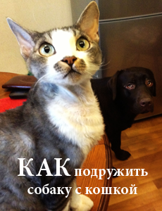 Как подружить собаку с котом